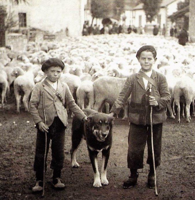 zagales-y-ovejas-del-pasado-made-in-slow