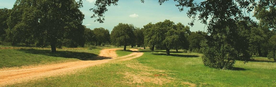 Caminos que se bifurcan en la dehesa extremeña